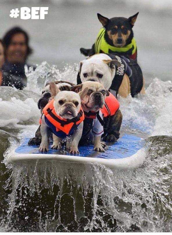 surf touttous