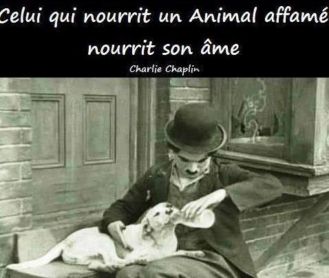 Celui qui nourrit un animal, nourrit son âme