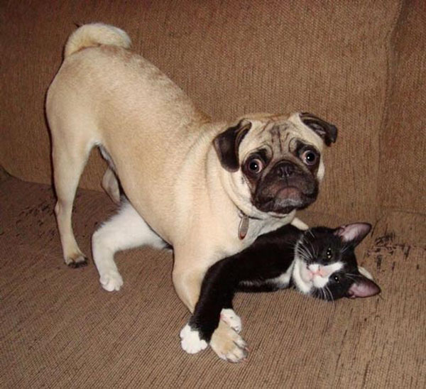 non, je n'embête pas le chat !
