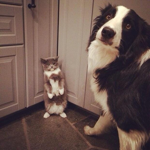 non ! je n'embête pas le chat