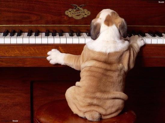 mon nom est Mozart