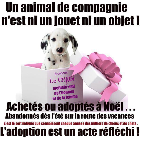 un animal de compagnie n'est un jouet ni un objet !