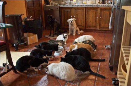 on se dépêche, nous on n'a pas encore mangé !