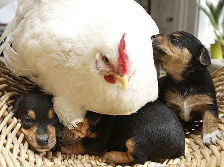 sacrée poulette !