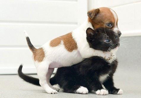 je t'attrape !