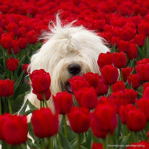 un.... wouaf parmi les fleurs