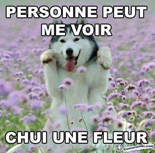 Chui une fleur !