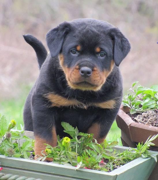 vous avez besoin d'aide pour jardiner !