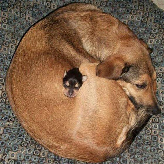 la chaleur d'une mère, rien de mieux !