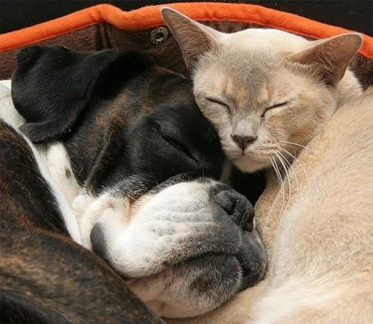 une sieste entre ami ! rien de mieux...