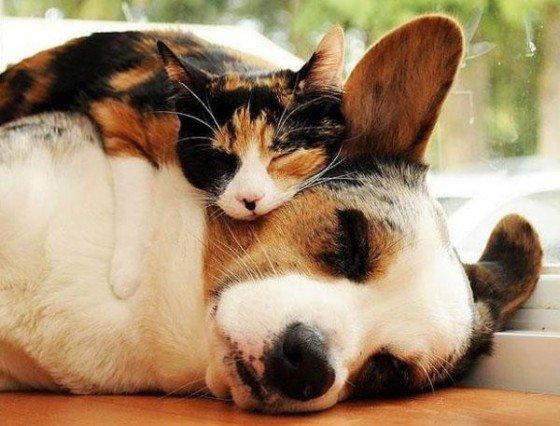 un oreiller ou une mini couveture