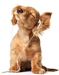 c'est la music wouaf-wouaf