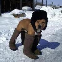 et bien oui ! il fait froid