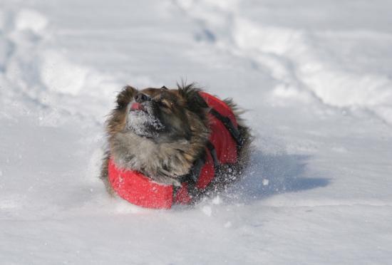 ou sont mes ski ?