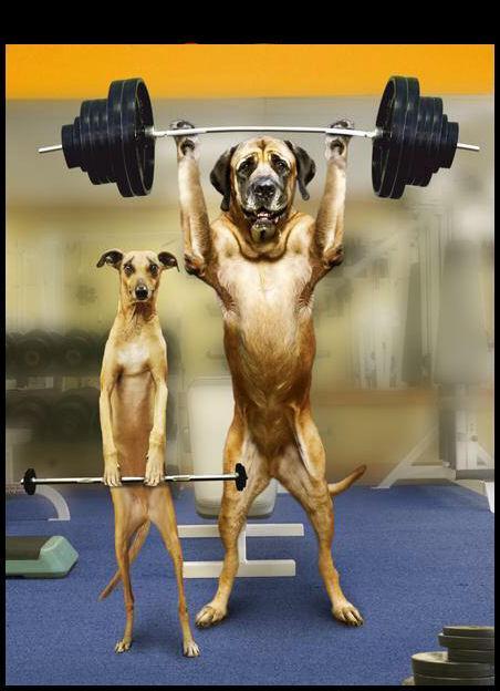 la-musculation-pour-chien