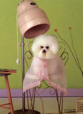 toilettage_chien_menuisier