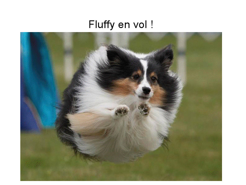 Fluffy s'envole