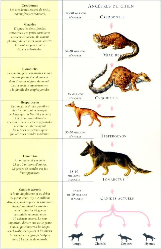 ancetres-du-chien-tableau.jpg