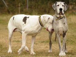 chien-aveugle-1.jpg