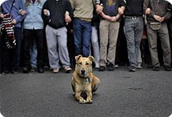 chien-grece-actu.jpg