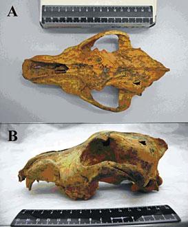chien-siberie-33000-ans.jpg