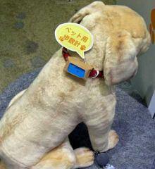 santevet-un-podometre-pour-chien-lance-au-japon-fujitsu-s.jpg