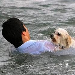 sauvetage-chien-mer-video-10.jpg