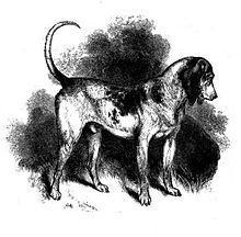 southern-hound.jpg