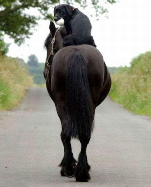sympa mon pote le cheval