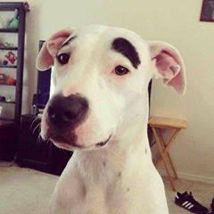 oui, c'est moi le charlot dog