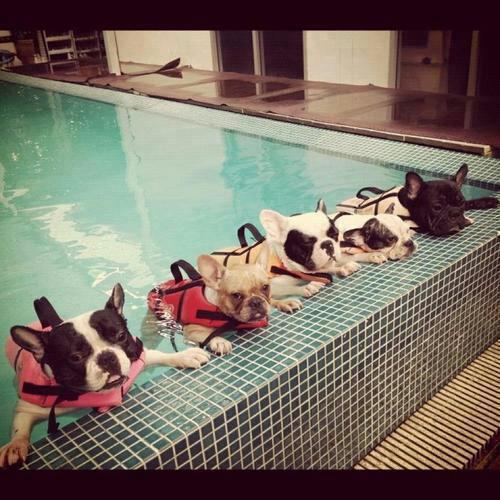 toutous nageurs!