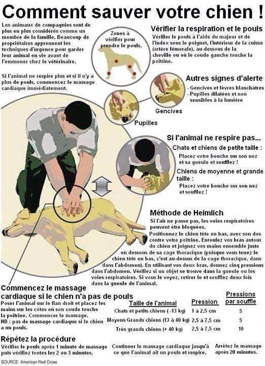 massage cardiaque pour les chiens