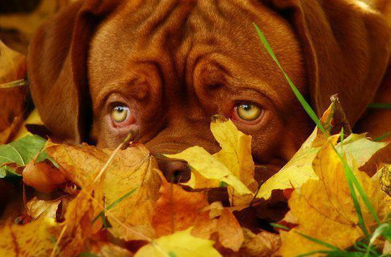 t'as beau yeux tu sais !!!!!