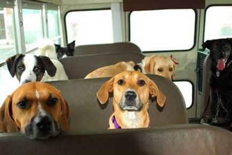 un bus pour tous