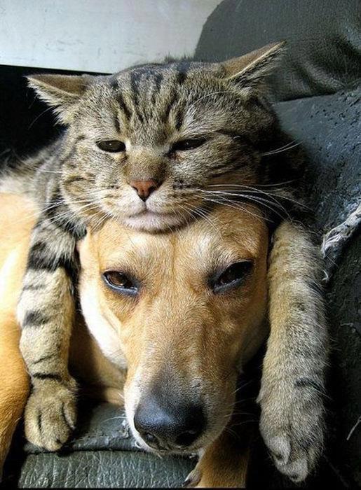 le chat peace end love!!!!