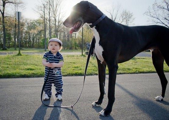 pas bouger le chien