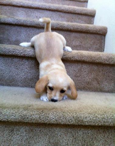 c'est dur dur les escaliers