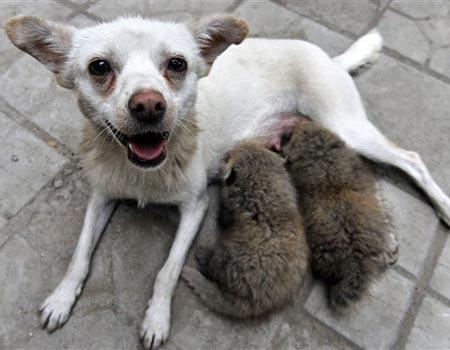 moi et mes bébés...et oui ! des pandas orphelins