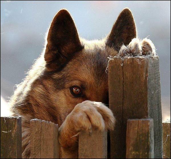 je suis timide
