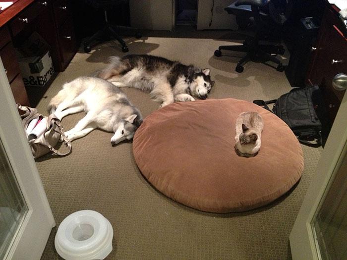 c'est mon lit !