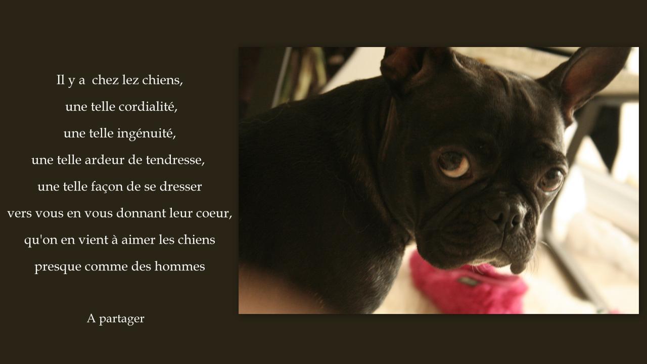 l'amour des chiens