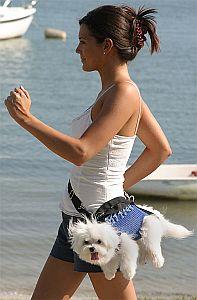 doggy bag ou bêtise humaine ? !!!!