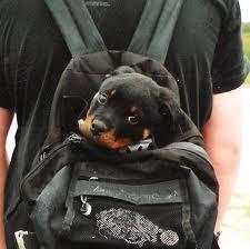 doggy puppy bag