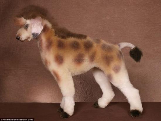 chien -girafe