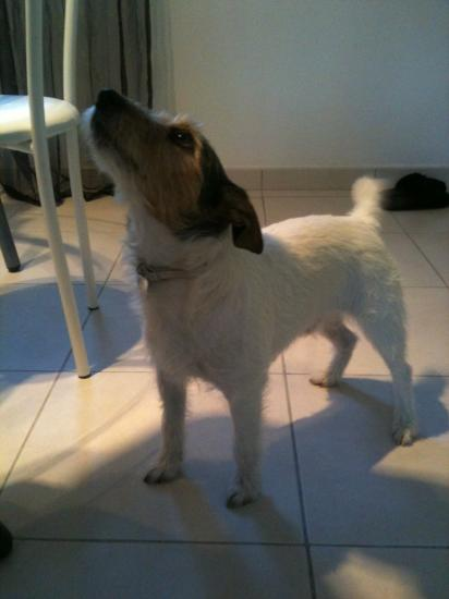Austine (Parson) 5 ans