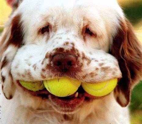 un tennis !