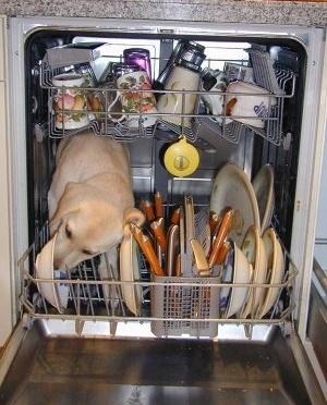 lave vaisselle écolo