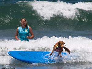 Ca surf pour moi