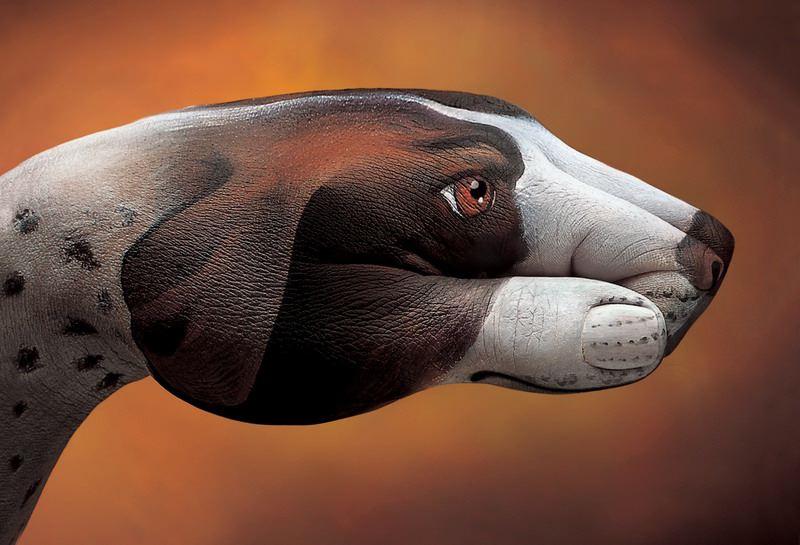 le beagle-main