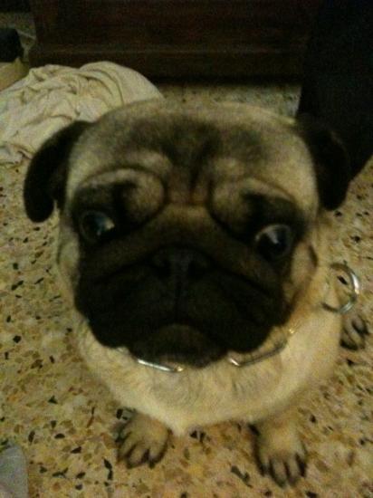 Chiro (carlin 3 ans)